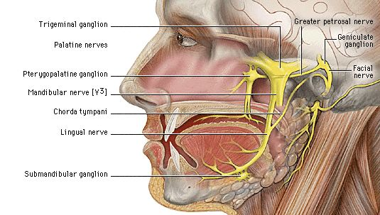 Facial nerve, Cranial nerves and Ears on Pinterest