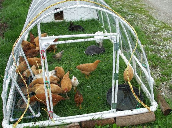 To be woods and chicken wire on pinterest for Big chicken tractor