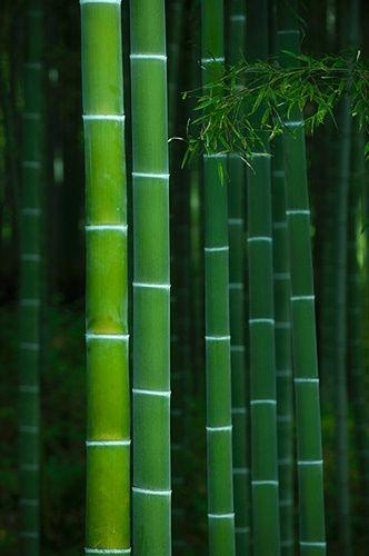 ~~bamboo grove in Tenryu-ji temple, Kyoto, Japan by Damien Douxchamps~~