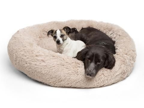 absolut soothing bed for dogs