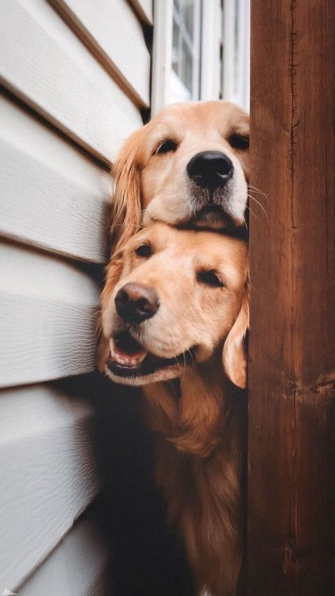G O O D V I B E Babyanimals G O O D V I B E In 2020 Cute Dog Wallpaper Cute Baby Animals Cute Animals