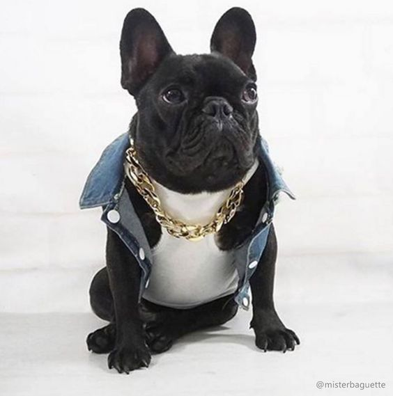 'Urban Street Style', French Bulldog, https://www.facebook.com/seubuldoguefrances/photos/