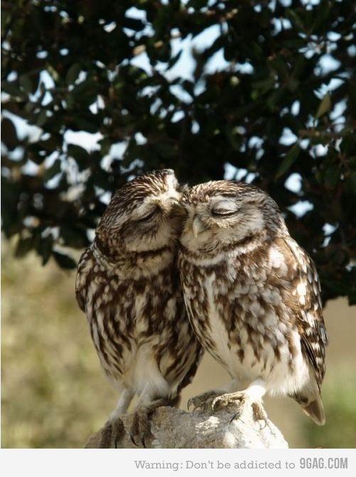 *mwah* owl love