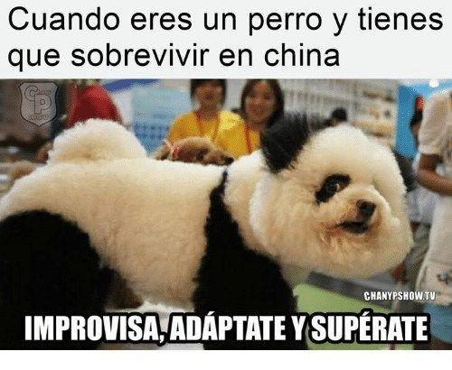 Nada Como Empezar La Semana Con Una Lista De Los Mejores Memes En Facebook Panda Bear Teddy Bear Memes
