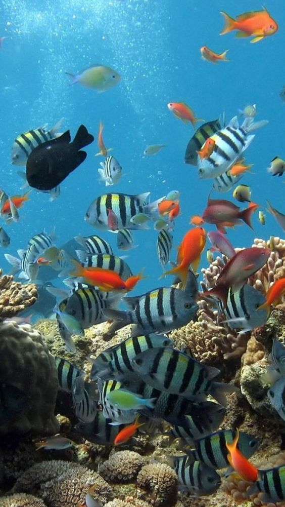 Red Sea Vacation Ocean Creatures Colorful Fish Underwater World