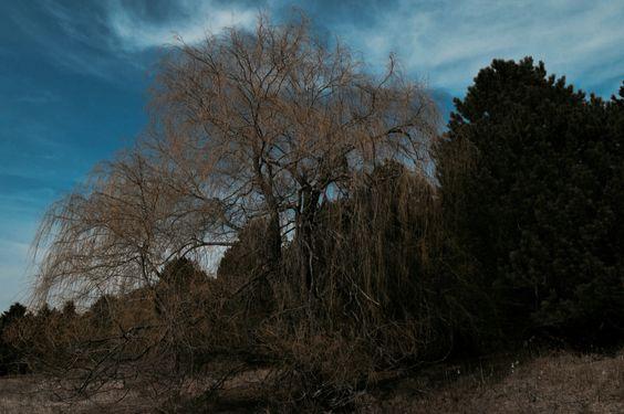 Blue skies and green vegetation