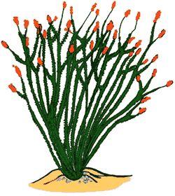 ocotillo cactus clipart southwest spark pinterest