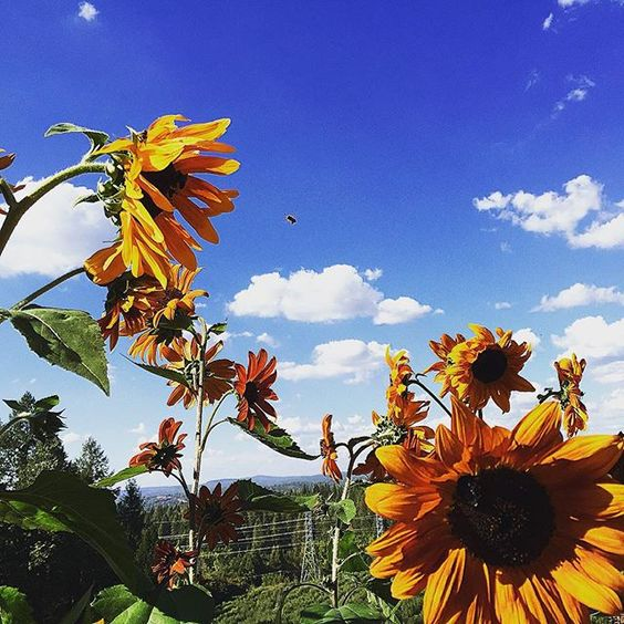 Kids Inc- Apple Hill  Beyond gorgeous day 🐝