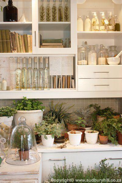 Herbs:  #Herbs. herbs in da house. in da dream kitchen