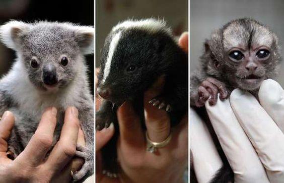 Adorable baby animals that would fit in your palm! - Frank Augstein/AP Photo: Hays Daily News, Adam Gerik/AP Photo: AFernando Vergara/P Photo