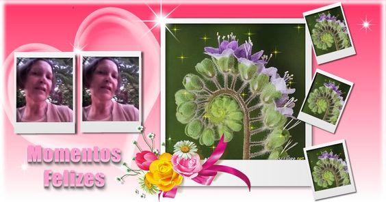 SÍDIA GOMES Colagem com 6 fotos do Facebook