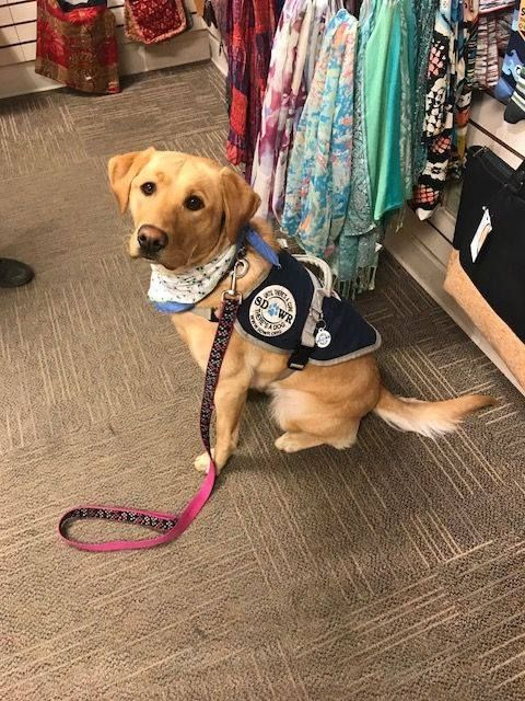 Dove Was A Good Girl On Our Shopping Trip Service Dogs Gear