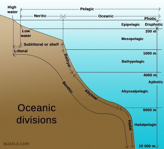 The ocean the o 39 jays and articles on pinterest for Ocean floor zones diagram