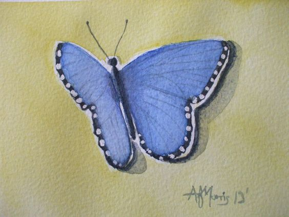 Blue butterfly shadows. By AF Morris