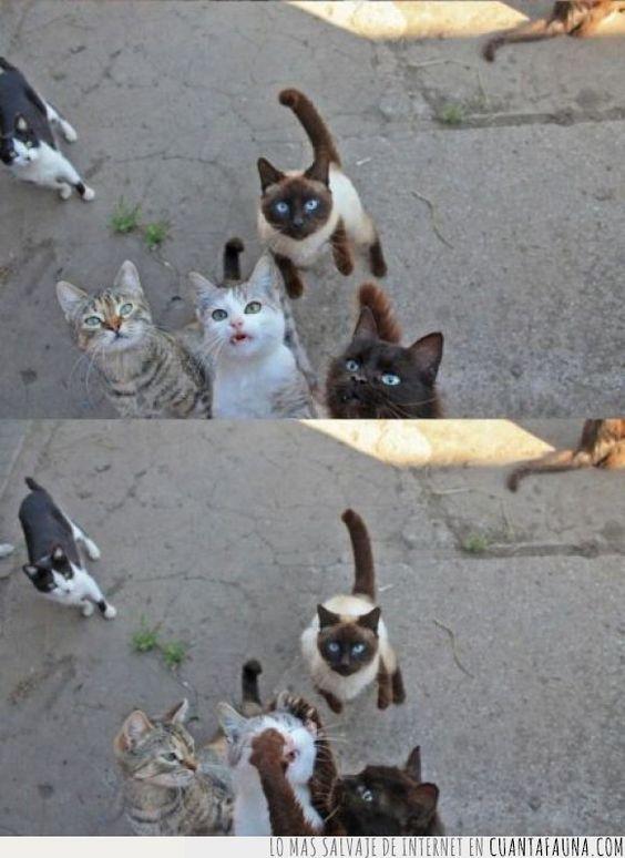 Los gatos son muy de compartir y tal