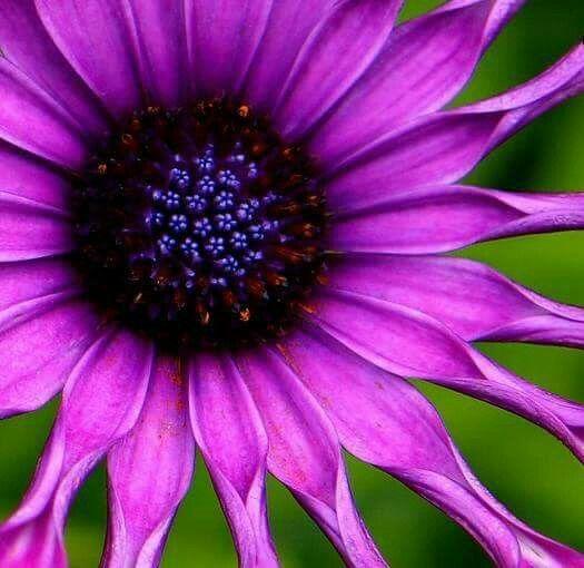 الناس معادن تصدأ بالملل وتتمدد بالأمل وتنكمش بالألم Amazing Flowers Flower Pictures Flowers