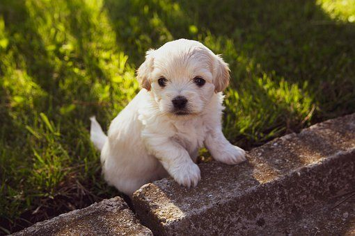 How Take Care Of Teacup Puppies In 2020 Cute Baby Puppies Cheap Puppies Puppy Dog Images