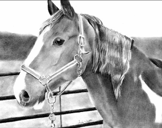 Drawing From Picture -  Custom Horse Pencil Drawing - Various Sizes Available