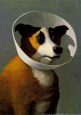 """One of my favorite movies is Amelie. This portrait of a dog in """"the cone of shame"""" is from her bedroom scene. I will own it one day."""
