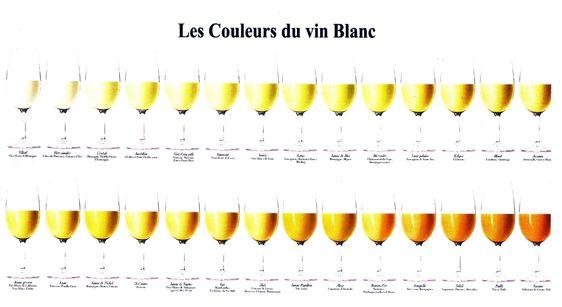 Nuancier vin blanc2.jpg (3144×1716)