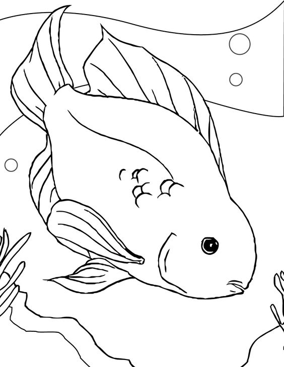 fish color page parrot fish Coloring Pinterest The