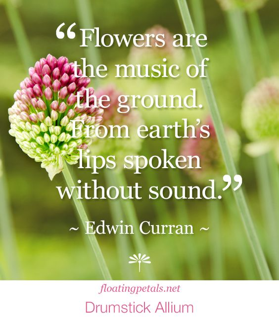 """Flowers are the music..."" is part of a poem Edwin Curran wrote, and I couldn't...to read more and learn about the author: http://floatingpetals.net/flower-quote-flowers-are-the-music/"