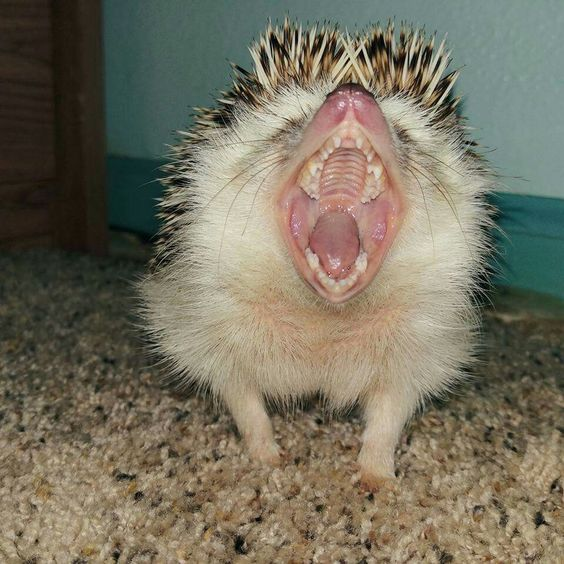 """♡☆ """"Look Ma, my """"toofies"""" are great, I don't need a Dentist!"""" ☆♡"""