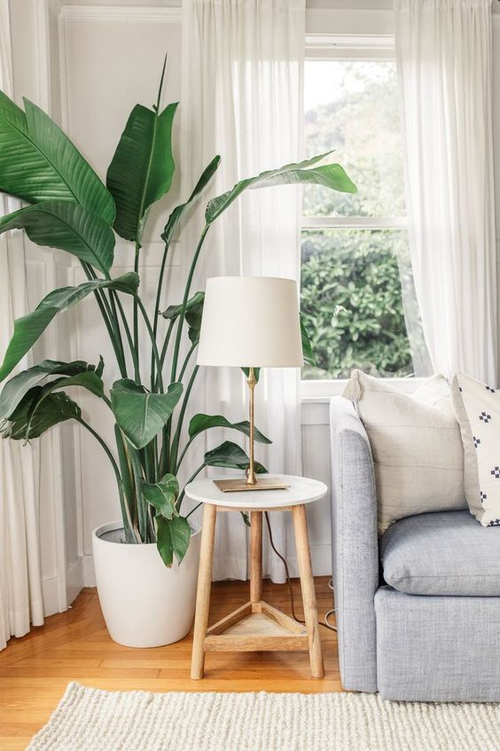 60 Plant Stand Design Ideas For Indoor Houseplants Page 14 Of 67 Lovein Home Living Room Plants Minimalist Living Room Apartment Living Room