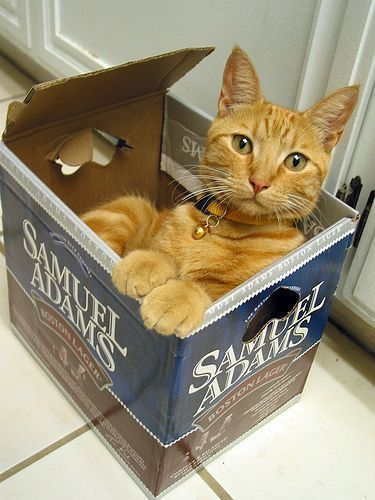 Super cute ginger cat in box