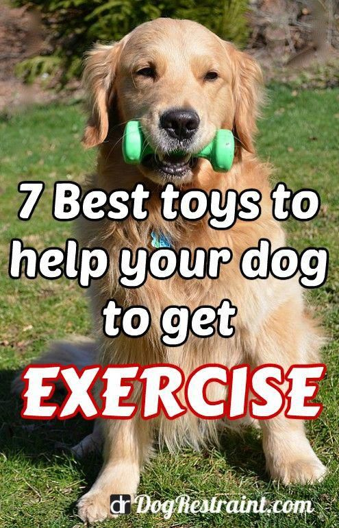 Dog Grooming Dog Training Dog Stuff Dog Ideas Dog Care Dogtoys