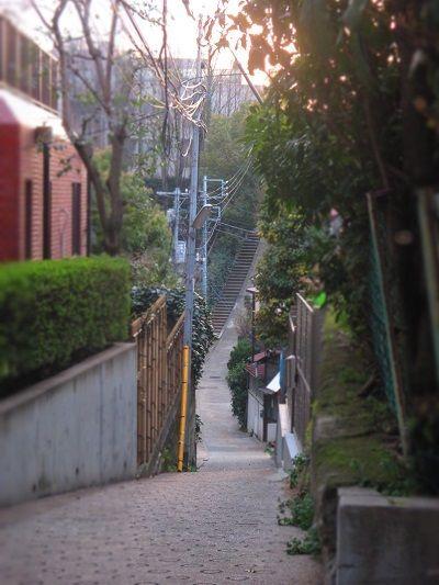 (その2)「マミジロウのお出掛け」「ワンコOKの飲食店2」 「横浜、スターチャイルドへ!」の巻 の画像|マミジロ日記