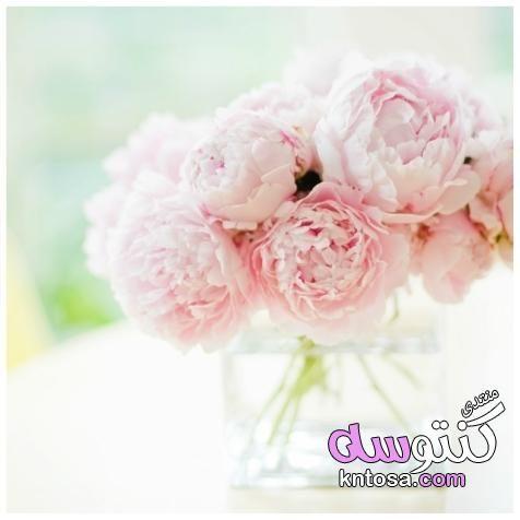 اروع صور ورد2019 اجمل ورود العالم اجمل باقة ورد رومانسية خلفيات ورود جميلة جدا2019 Beautiful Flowers Blooming Flowers Floral
