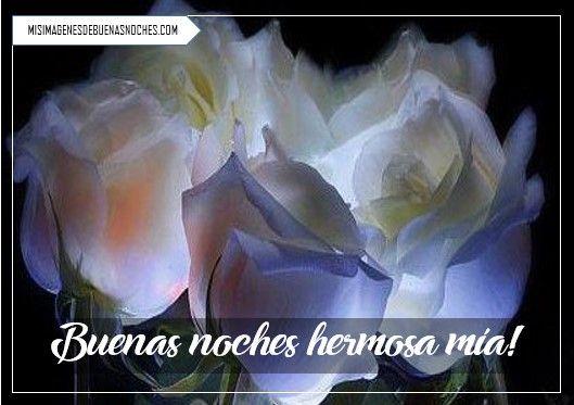 Imagenes De Buenas Noches Con Rosas Blancas Imagenes De Buenas Noches Flores Bonitas Flores Wallpaper