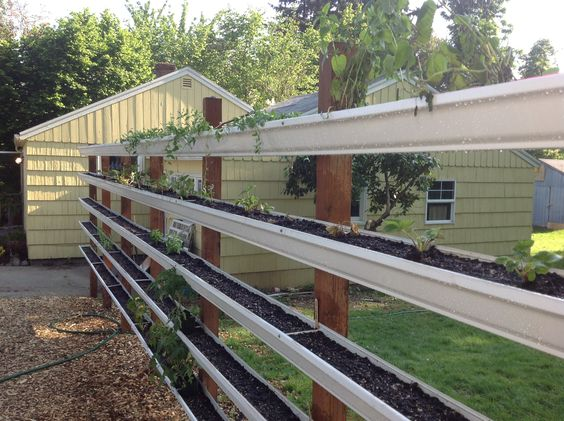gutter garden live fence we built and filled with small