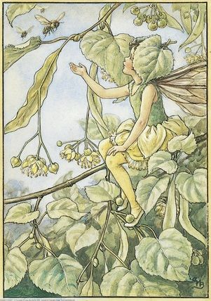 llustration for the Lime Tree Fairy from Flower Fairies of the Trees. A girl fairy sits on the branch of a lime tree which is in flower. She holds out her right hand to a some bees who are flying to collect the pollen.  										   																										Author / Illustrator  								Cicely Mary Barker