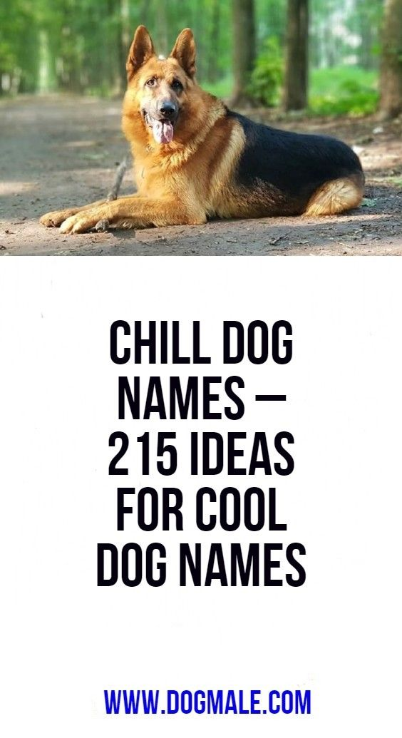 Chill Dog Names 215 Ideas For Cool Dog Names Best Dog Names