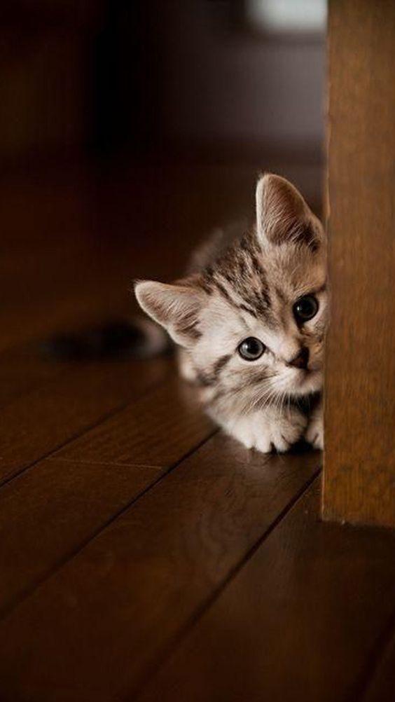 ป กพ นโดย Maria Eduarda ใน Cute Cat ล กแมว ส ตว เล ยง ร ปส ตว น าร ก