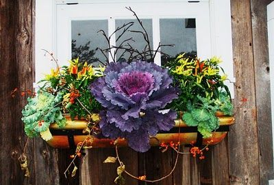 A beautiful fall/ winter window box