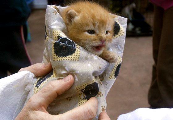cuddly kitten burrito <3