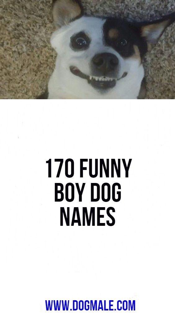 170 Funny Boy Dog Names In 2020
