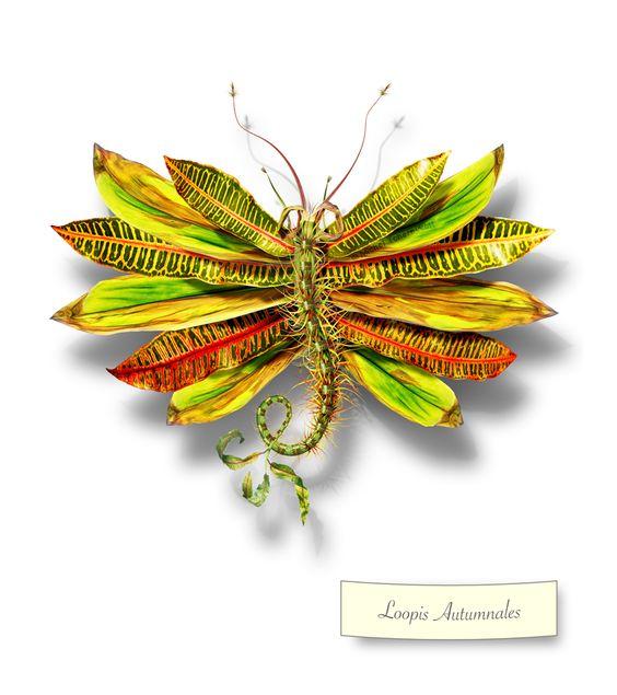 """Loopis Autumnales"" -Michel Tcherevkoff"