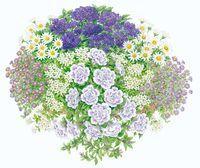 Blau-violette Pflanzideen: Gartencenter Ostmann grün erleben