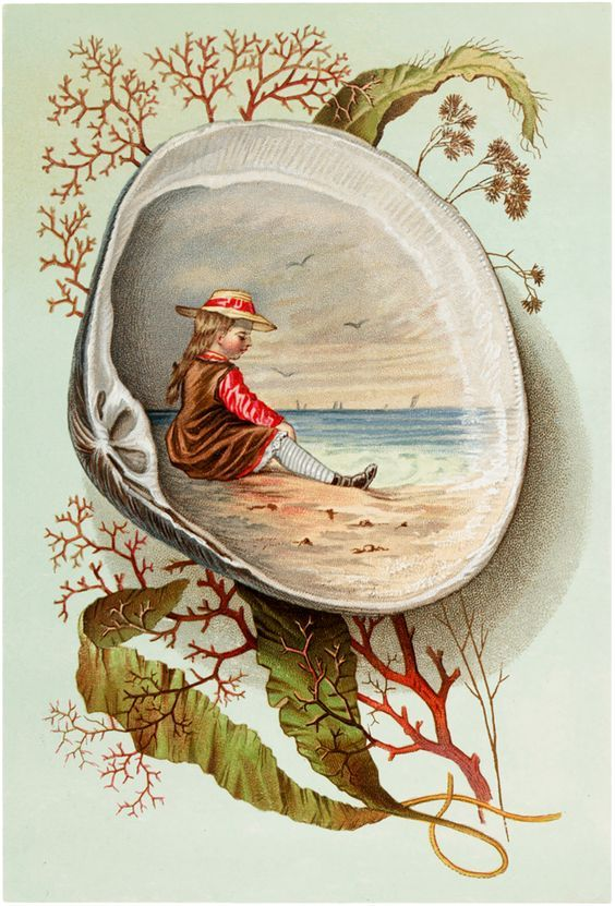papers.quenalbertini: Vintage Clam Shell Scene Image | The Graphics Fairy