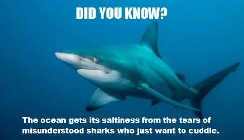 Poor sharks.