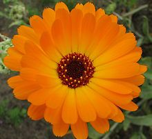 october flower - Google Search