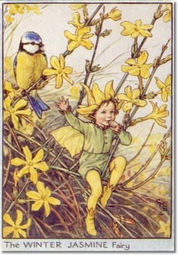 Cicely Mary Barker - Flower Fairies of the Winter - The Winter Jasmine Fairy