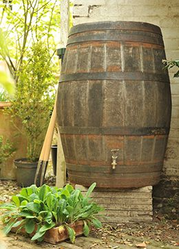 Repurposed Oak Whisky Barrel for catching Water for the Garden