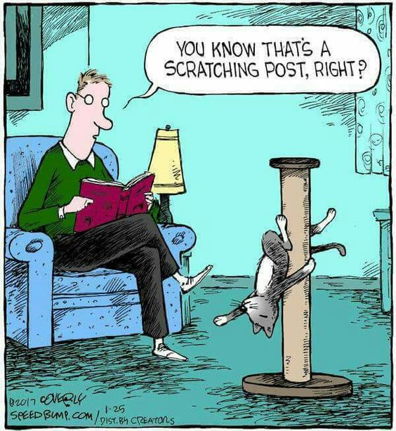 You know that's a scratching post, right?: