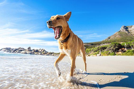 dog sunscreen petbarn