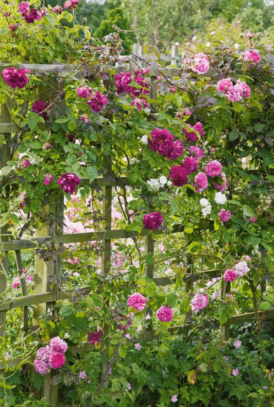 Pinterest the world s catalog of ideas for Garden divider ideas
